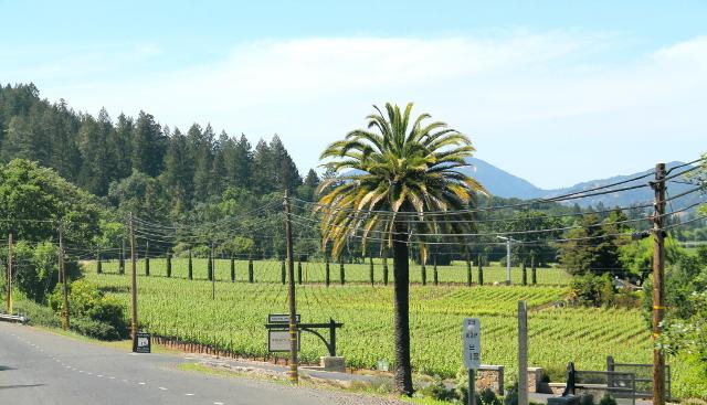 Parhaat kuvat viinitarhoista tulisi varmasti tiloilta, pitäisi tähdätä kukkuloilta laaksoon. Me vain ajoimme laakson pohjalla olevaa tietä, joka kuulemma viikonloppuisin on aika tukossa viikonloppulomailijoista.