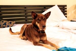 Brownie Phuketissa minun kanssani.