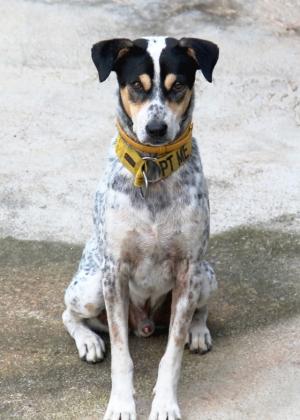 Buddy on nuori poika Koh Phi Phin saarelta, josta se tuotiin Koh Lantalle huonokuntoisena ja laihana pari vuotta sitten. Se hoidettiin kuntoon ja se jäi Lanta Animal Welfarelle, kun se oli ollut keskuksella jo pitkään ja kissojen täyttämänä saarena Phi Phi ei ole hyvä paikka kodittomille koirille.