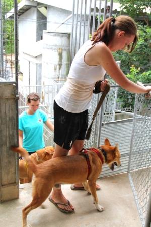 Vapaaehtoiset vievät Deng- ja Noodle -koirat vierailijoiden kävelytettäväksi.