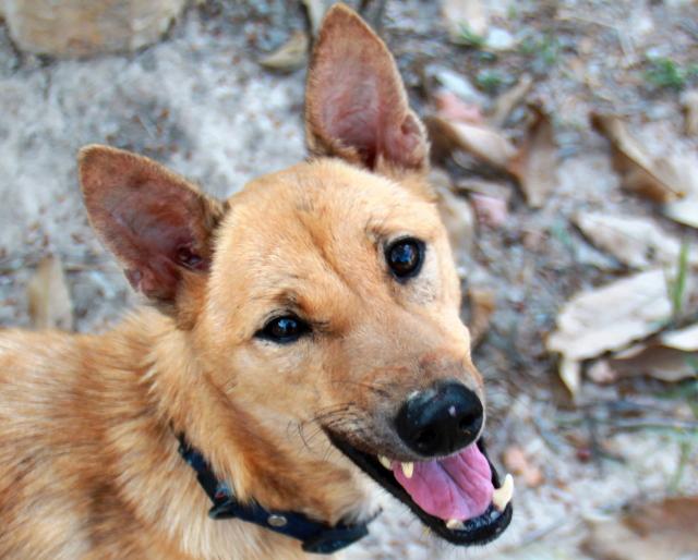 Fredin toi Lanta Animal Welfarelle saksalaismies, joka adoptoi Fredin, mutta jonka piti mennä jo edeltä Saksaan. Mies oli löytänyt Fredin huonokuntoisena lähisaarelta. Aluksi Fred oli hyvin ujo ja säikky, mutta oli upeaa nähdä sen edistyvän vinhaa vauhtia. Alle kahdessa kuukaudessa siitä tuli normaali koira, joka menee kävelyille tuntemattomien ihmisten mukaan ja pärjää hyvin laumansa muiden koirien kanssa.