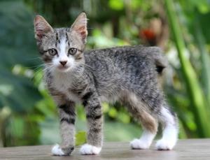 Ruikulipentu dumpattiin Lanta Animal Welfarelle. Onneksi se sai pian paikallisen kodin. LAW pitää usein sunnuntaisin adoptiotapahtuman paikallisessa puistossa, jotta kissat saisivat kodin.