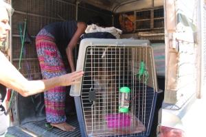 Lanta Animal Welfarelta lähtee keskimäärin yksi koira viikossa ulkomaille (käytännössä silti niitä voi lähteä useampi samalla erää), joten nämä lähtövalmistelut ovat tuttua puuhaa. Koira lähtee oikein varustellussa lentokopassa kohti lentokenttää adoptiokoordinaattorin hoidettua asiat kuntoon etukäteen. Mahdollinen lentovapaaehtoinen tapaa koiran lentokentällä.