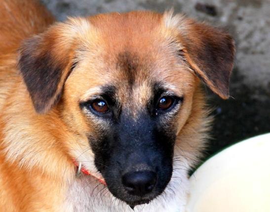 Skyla on Saksaan lähtevä pentu, jonka Lanta Animal Welfaren vapaaehtoiset pelastivat viime syksynä Koh Phi Phi saarella. He olivat lähdössä sieltä takaisin Koh Lantan lautalle kun näkivät ihmisiä meren rannalla hukuttamassa pentuja. Skyla ja hänen jo uuteen kotiin lähtenyt siskonsa pelastettiin siltä seisomalta turvaan. Skyla on ehkä ystävällisin ikinä tapaamani koira, aivan ihmeellinen pentu, jonka moni haluaisi viedä mukanaan.
