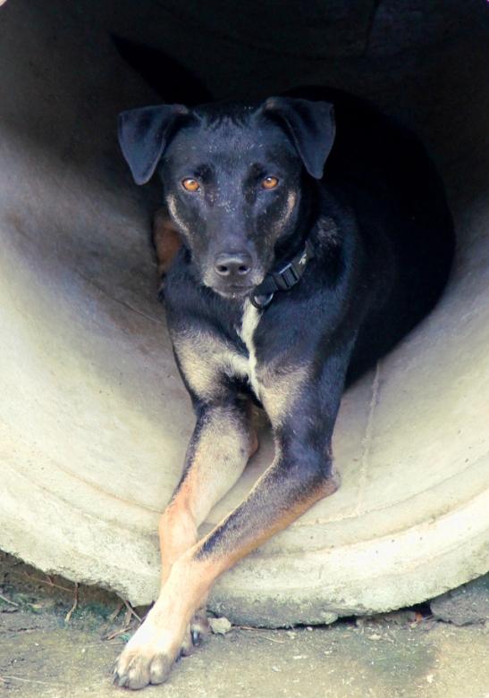 Tammy on parivuotias energinen tyttö. Se eleli ystävällisen koiralaumansa kanssa Saladanin kylässä yli vuosi sitten, mutta aktiivisen luonteensa ja kissojen jahtaamisen takia sitä puukotettiin ja se joutui Lanta Animal Welfarelle hoitoon ja jäämään sinne, koska sen ei olisi ollut turvallista palata enää Saladaniin. Se olisi onnellinen jos sillä olisi Oma Ihminen.