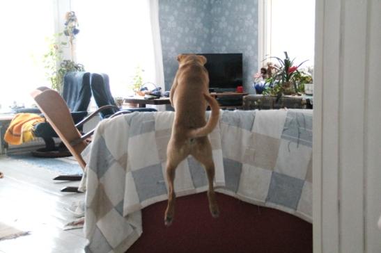 Wispan mielestä on helpompi hypätä sohvan selkänojan yli kuin kiertää se.