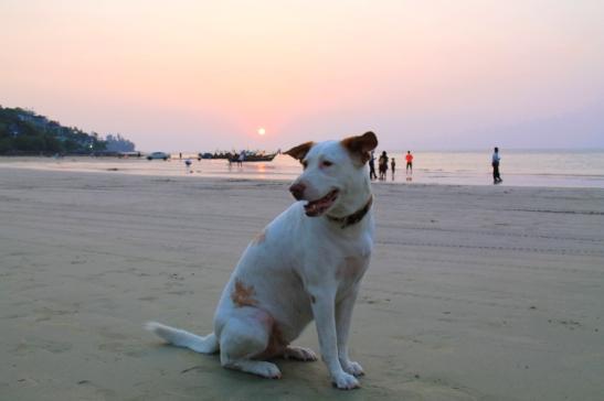 koira kamalan rannalla