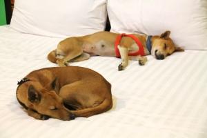 Koirat nukkuivat makeat yöunet.