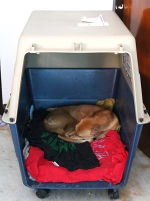 Totutin koirat nukkumaan kopissansa etukäteen.