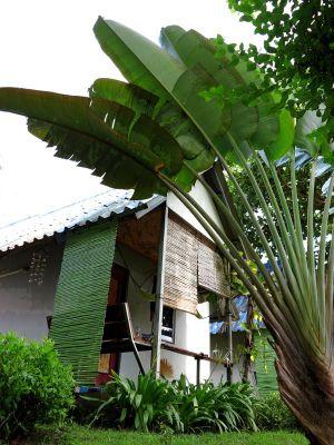bungalow ja palmu