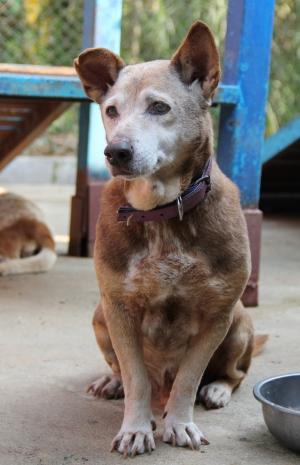 Casey on ihana vanhempi herra, joka asuu Care for Dogsin turvatarhalla, mutta sen kuuluisi päästä oikeaan kotiin.