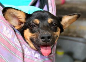 Myös Cocon löysi ja adoptoi ruotsalaisperhe, joka odottaa saavansa Cocon Ruotsiin muutaman kuukauden kuluttua.