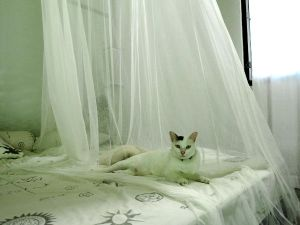 Otimme huoneeseemme kissoja yöksi. Silloin pitää muistaa ottaa myös kissanhiekkalaatikko ja vesikuppi.