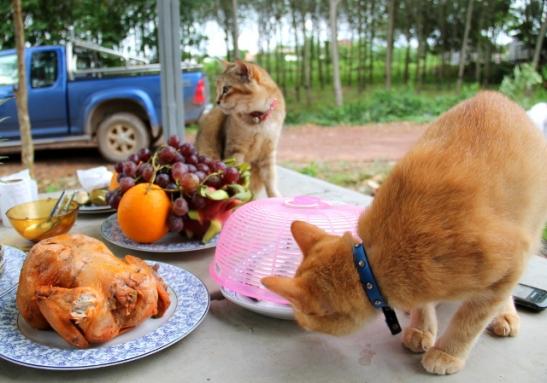kissat pöydällä