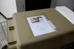 Koppaan on hyvä kiinnittää lappu, jossa on koiran kuva, nimi ja lentotiedot. Nämä ovat varmistamista ja koiran kuva toivonmukaan saa lentokenttätyöntekijät toimimaan sympaattisemmin koiraa kohtaan.