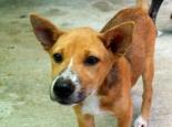 Laila-pentu Care for Dogsilta Chiang Maista.