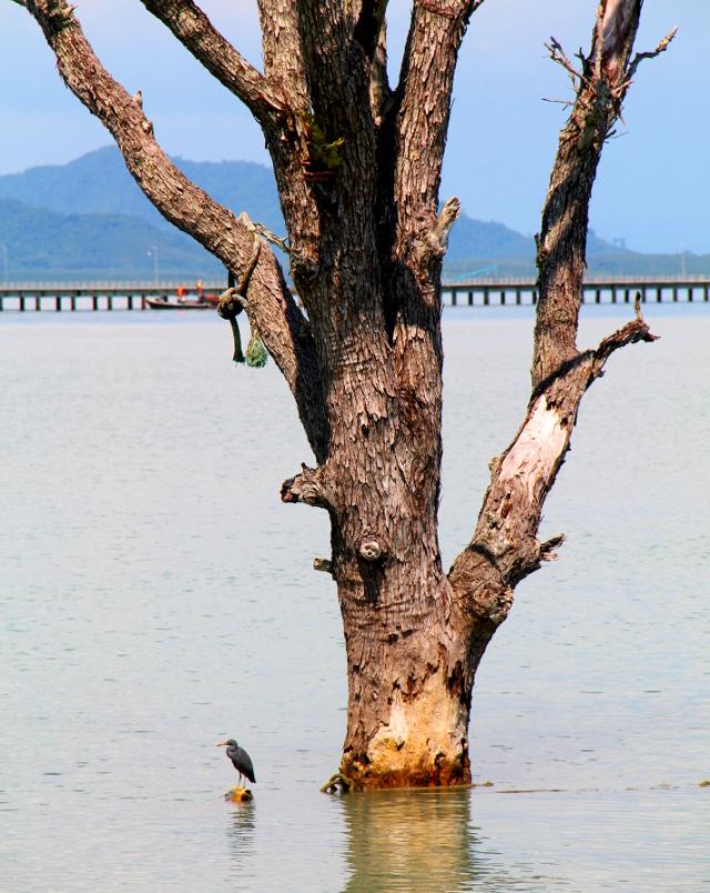 lintu ja puu vedessä