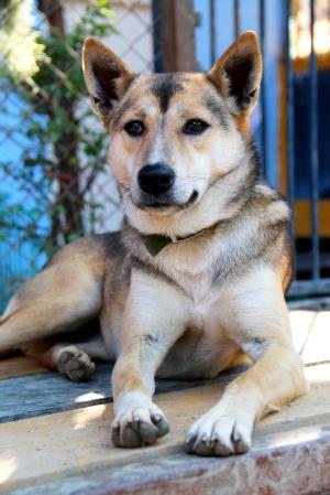 Malie on pelastettu koiranliharekasta. Nyt se asuu Euroopassa.