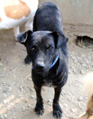Care for Dogsilla oli Rex-koira, jonka piti päästä matkustamaan Eurooppaan, mutta sen piti odottaa että sen turkki näyttäisi paremmalta. Se oli jo terve, mutta Chiang Main viranomaisten mielestä se näytti epäilyttävältä eivätkä päästäneet sitä lähtemään. Siksi tämmöisiä tapauksia pitäisi viedä näytille ennen matkalippujen ostamista.