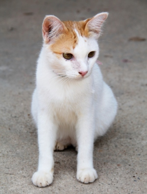 Peter-kissa tarvitsisi kodin. Lanta Animal Welfaren koirat ovat valmiita matkustamaan ulkomaille elleivät ne ole alle 7-kuukautisia pentuja tai olleet tarhalla alle 4 kuukautta. Kissojen vientiprosessi aloitetaan vasta adoptiopäätöksen jälkeen ja ne pääsevät matkustamaan Suomeen siitä noin 3,5 kuukauden kuluttua.