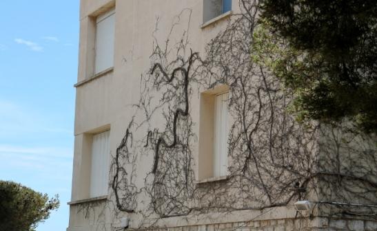 köynnöstä seinässä