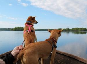 Vanhempieni koirat tykkäsivät veneilystä ja etenkin määränpään tutkimisesta.
