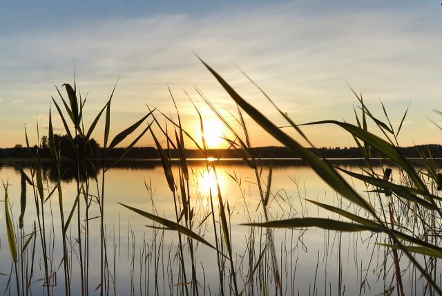 aurinko laskee järvellä kaislikko