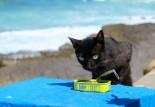 kissa ja sardiinipurkki