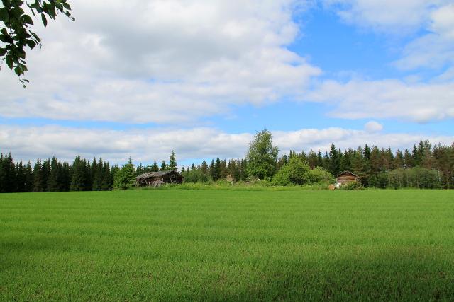 Polun varrella on nättiä maalaismaisemaa ja Mustinmäki on idyllisen näköinen kylä.
