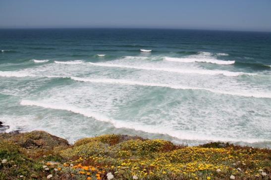 merenrantaa ja keltaisia kukkia