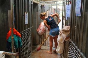 Lanta Animal Welfarella koirat viettävät yöt kenneleissä (ja sairastapaukset myös päivät) kenneleissä ja ne kuurataan joka päivä ja lisäksi tarpeen vaatiessa.