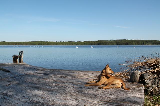 wispa järven rannalla