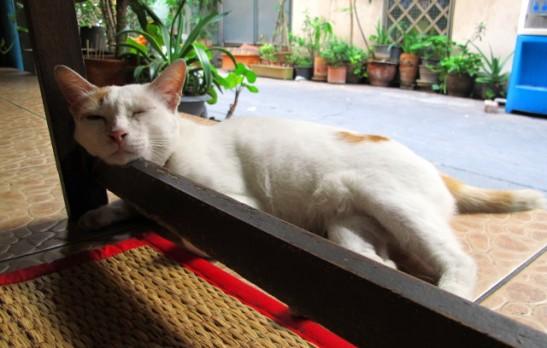 kissa-kuumassa