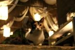 Yksi Time for Limessa asuvista yli kymmenestä kissasta. El