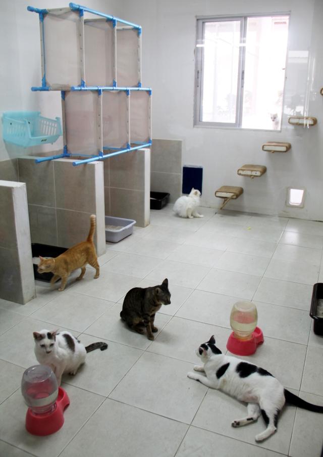 Kissahuone Soi Dogilla. Rappuja pitkin ne pääsevät ulkoiluaitaukseen.