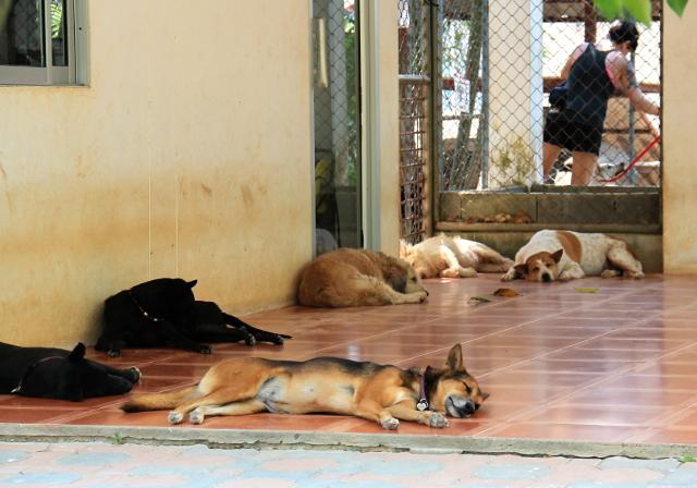 koiria-soi-dogilla