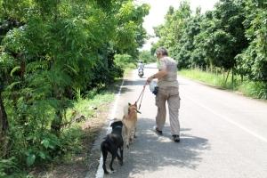 Koirien kävelytys on vapaaehtoisten perushommaa Care for Dogsilla. Sinne on Nimmanhaeminilta yli 10 km matka.