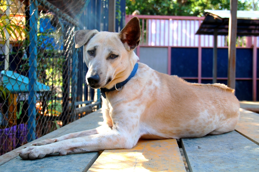 lily_pelastettu-koiranliharekasta