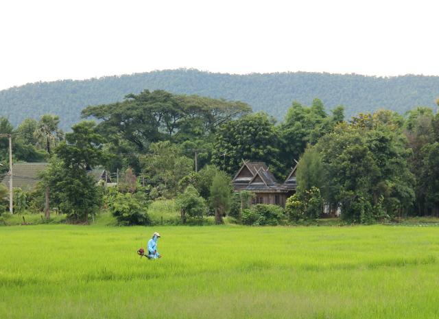 riisipelto-ja-thaimaalainen-talo