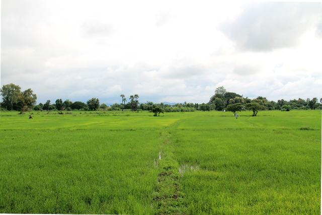 riisipeltomaisemaa-chiang-mai