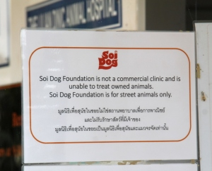 Soi Dogin päätehtävä on auttaa katukoiria- ja kissoja.