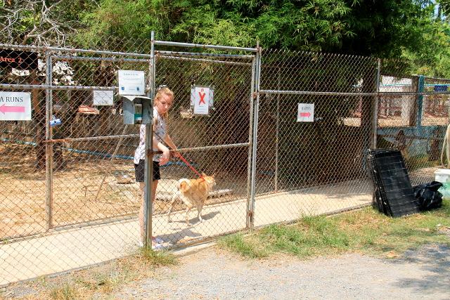 Vapaaehtoinen viemässä koiraa takaisin aitaukseen.