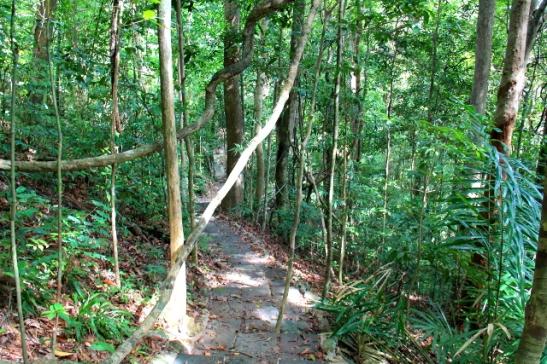 Enimmäkseen polku kulki tällaisessa viidakossa.
