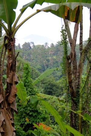 Balin vehreät maisemat ovat mielestäni paras juttu siellä. Tässä pusikkoa ja välissä yksi lukuisista jyrkistä jokikanjoneista.