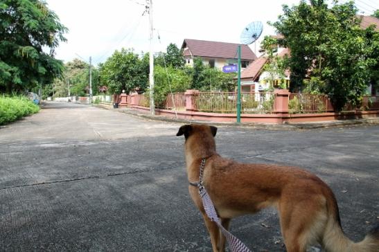 koira-moo-baanissa