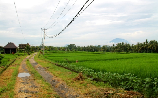 Ubudissa pääsee riisipeltopoluille kävelyille.