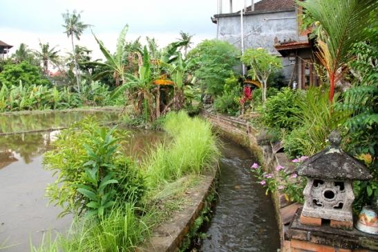Riisipeltojen kastelua varten Bali on täynnä tällaisia ojia.