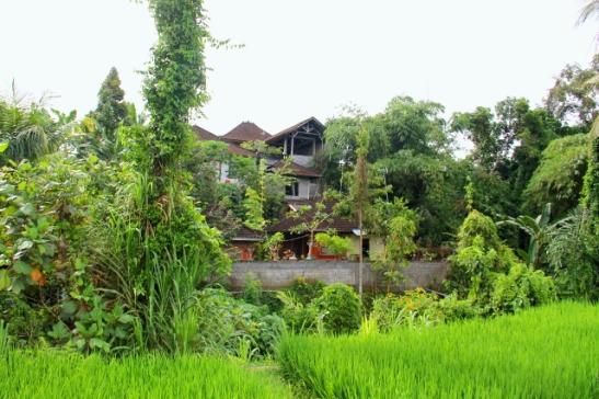 talot-riisipellon-takana