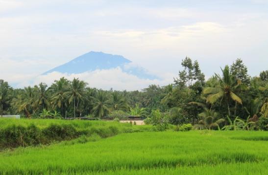 vuori-riisipellon-takana-2