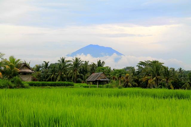 Vuori riisipellon takana.